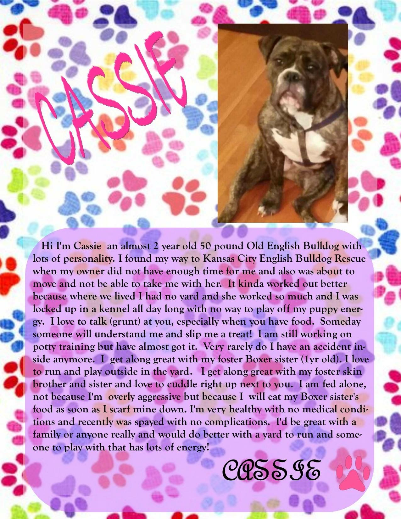Cassie (Old English Bulldog)-Adopted