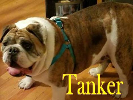 Tanker-Adopted