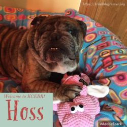 Hoss-Adopted