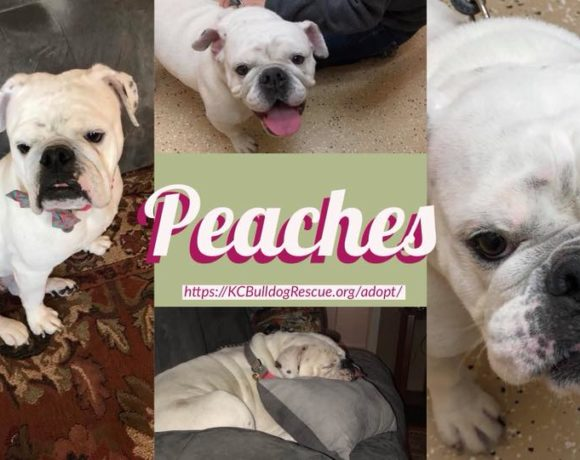 Peaches-Adoptable